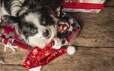Tips To Help Your Pet Enjoy a Safe Holiday