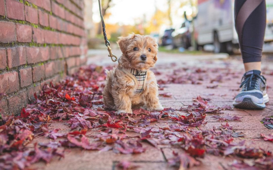 7 Ways to Be a Responsible Dog Owner