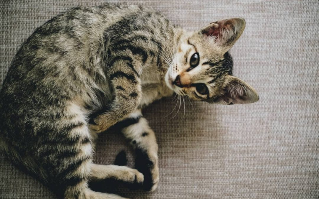 Veterinary Care For Your Cats