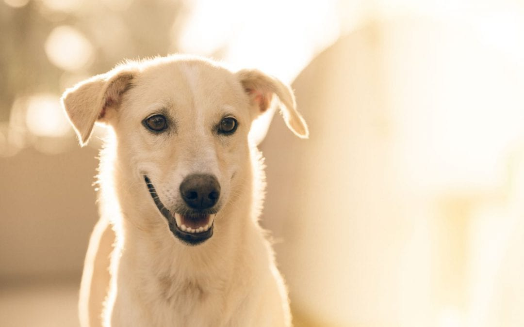 3 Simple Ways to Show Your Senior Pet Some Love