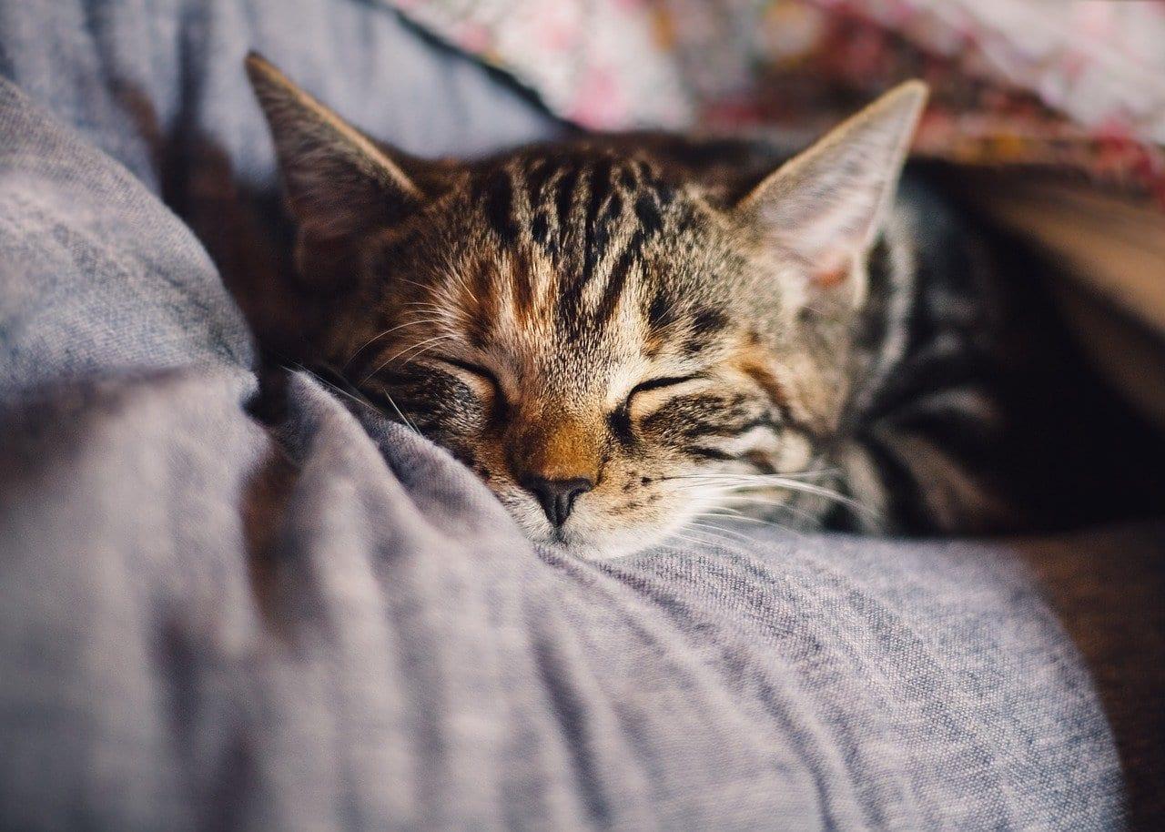 cat sleeping after pet wellness plan check