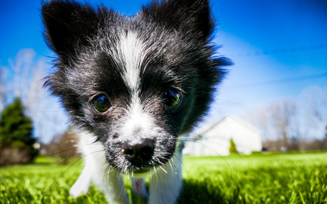 Keeping Parasites Off Your Pet This Spring