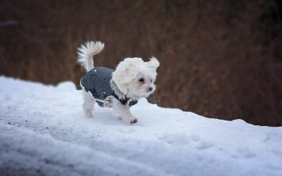 Tips for Walking Your Dog in Erratic Spring Weather