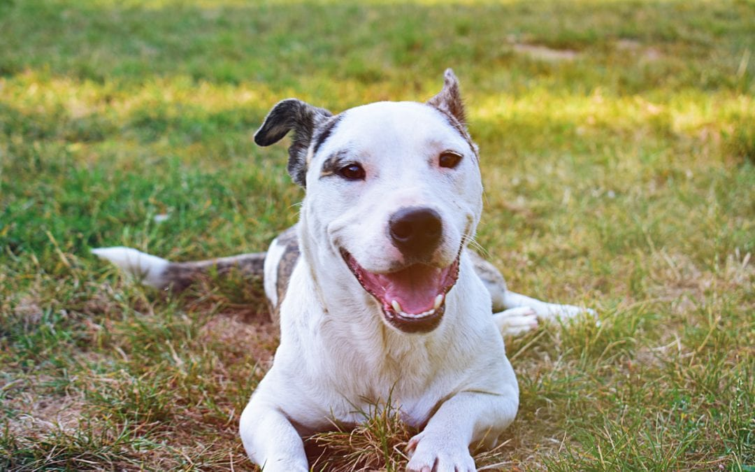 Using Positive Reinforcement With Your Dog